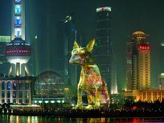 Projet d'Aurèle à Shanghai /chien-jaune-aurele-shanghai.jpg
