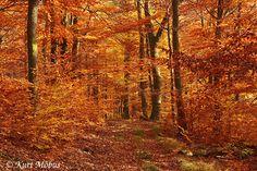 UMWELTBILD ® Herbstwald