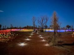 Ingredients for a Beautiful Life!An Incredible Outback Light Show – Experiencing Uluru's Field Of Light