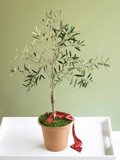 Olive tree!!