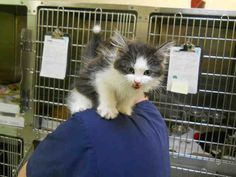 Flurff (A661213) is available at Pet Social (11 Fort York Blvd)!
