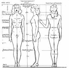 Les proportions du corps   leflux.fr
