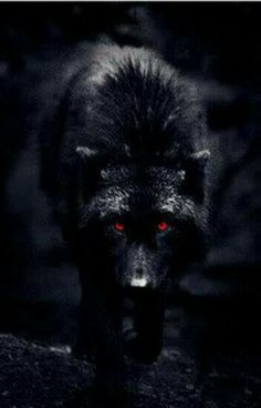 black wolf with red eyes Artwork Lobo, Wolf Artwork, Wolf With Red Eyes, Wolf Eyes, Wolf Photos, Wolf Pictures, Wolf Love, Bad Wolf, Wolf Tattoos
