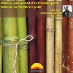 Bamboo is not a weed, it's a flowering plant. Bamboo is a magnificent plant. - Steve Lacy (American Saxophonist 1934 - 2004)  Learn all about bamboo: http://www.bambrellausa.com/news/2014/4/1/the-wind-test
