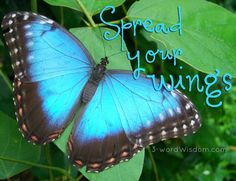 """Spread your wings"" quote via www.Facebook.com/3WordWisdom and www.3-WordWisdom.com"