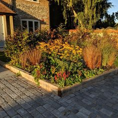 This border looks beautiful in the late summer sun. Late Summer, Summer Sun, Hampshire, Beautiful Landscapes, Landscape Design, Sidewalk, Autumn Photography, Planting, Landscaping