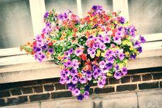 Bánj gondosan a petúniáddal, és akkor a szomszédaid csodájára járnak a balkonládákból kiömlő virágzuhatagnak. Floral Wreath, Wreaths, Home Decor, Floral Crown, Decoration Home, Door Wreaths, Room Decor, Deco Mesh Wreaths, Home Interior Design