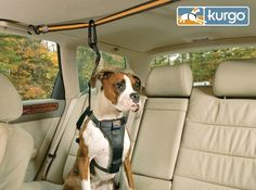 It's nice to be a dog owner whose pup loves nothing more than to get in the car and go. But not every traveler is perfect. For those such pups, the Auto Zip Line is perfect. Inspired by a dog run, zip line allows back and forth plus sit and stand movement, but also provides security for those unexpected driving moments we'd rather not think about. A smooth running machine, this makes it super easy to get on the road with your pup. Here is a happy and safe solution for everyone who agrees…