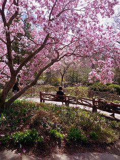 Spring ~ Shakespeare's Garden Central Park, NYC