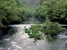 GALICIA - Bosques de Galicia - Rías Altas
