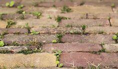 Malas hierbas  Para matar las malas hierbas que salen entre las losas de un suelo de ladrillo o piedra sólo hay que verter bicarbonato en polvo sobre las juntas. Permanecerán libres de malas hierbas si no han brotado y matará a las que sí lo hayan hecho.