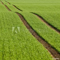 Getreidefeld im Frühling, Treckerspuren