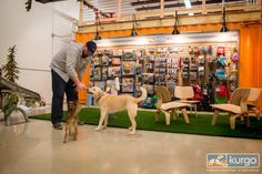 Kurgo's dog-friendly office
