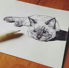( ミΦﻌΦ)ฅ cat sketch
