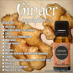 Learn all about the uses and benefits of Ginger EO with our free guide!