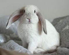 Paljon tietoa kanin hoidosta.