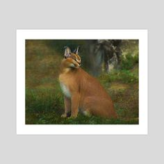 #INPRNT #fine art #print #poster #art Caracal, Print Poster, Savannah Chat, Wildlife, Fine Art, Art Prints, Printed, Gallery, Paper