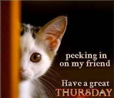 Have a great Thursday quotes cute quote kitten days of the week thursday thursday quotes