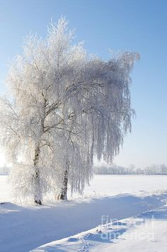 Winteridyll