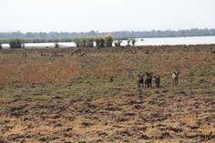 ❤️ #Liwonde #National #Park #Malawi