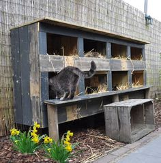 outdoor cat shelter for multiple cats feral cat house more outdoor cat shelter for multiple cats uk Feral Cat Shelter, Feral Cat House, Feral Cats, Cat Shelters, Animal Shelter, Outside Cat House, Outside Cat Shelter, Niche Chat, Cat Feeding Station