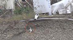 Un cachorro cae en una zanja y un gato acude en su ayuda - ELMUNDOTV 15/02/2017