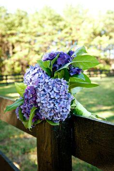 blue hydrangea along fence posts