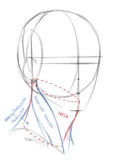 Drawing The Foundations For The 3/4 View Of The Male Head Head Anatomy, Human Anatomy Drawing, Anatomy Art, Drawing Lessons, Drawing Techniques, Drawing Tips, Drawing Heads, Drawing Poses, Neck Drawing