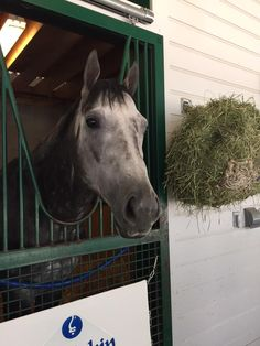 So proud of my boy Frosted!! #PennDerby