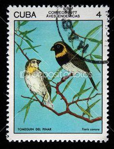 Cuba - circa 1977 : un timbre imprimé en cuba montre l'oiseau cubain Jacarini - tiaris canorus, timbre provient de la série, circa 1977