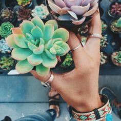 Little green succulent