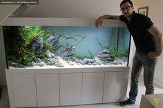 Kundenpojekt: Einrichtung eines Aquariums mit 1200L. Das Foto wurde am nächten Morgen gemacht. Das Wasser hatte noch eine ganz leichte Trübung. (28.09.2014)