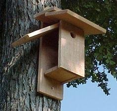 Build a bird house or feeder
