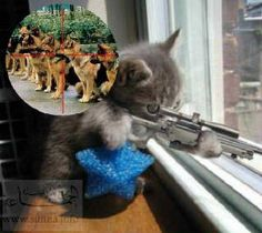 Sniper cat!