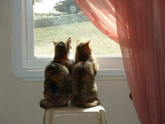 Molly & Sissy sharing the window