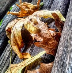 """134 """"Μου αρέσει!"""", 6 σχόλια - Evanthia Kaba (@evanthia_kaba) στο Instagram: """"#naturephotography #autumnvibes🍁 #autumn #detailshots #details #nature #naturelover #love_details…"""" Meat, Nature, Instagram, Food, Naturaleza, Essen, Meals, Nature Illustration, Off Grid"""