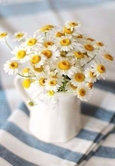 Our goal is to keep old friends, ex-classmates, neighbors and colleagues in touch. Shabby Flowers, Love Flowers, My Flower, Flower Power, Flower Beds, Calming Pictures, Flower Decorations, Table Decorations, Vintage Shabby Chic