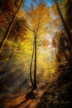 wowtastic-nature: 💙 Rays of Light II on by Stefan Bossow, Germany☀ Canon EOS Mark Beautiful World, Beautiful Places, Beautiful Pictures, Landscape Photography, Nature Photography, Tree Forest, Amazing Nature, Belle Photo, Nature Photos