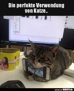 Daily Funny Memes And Pictures Release 6 Pics) - Page 3 of 9 - DrollFeed Very Funny Pictures, Funny Animal Pictures, Funny Photos, Random Pictures, Cute Funny Animals, Funny Cute, Cute Cats, Tierischer Humor, Cat Valentine