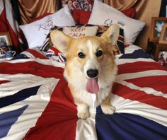 This should be my bed. Just replace the Corgi with a Cavi.