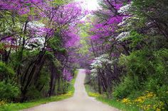 árboles púrpuras