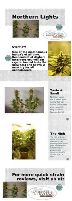 Smokeweedeveryday.org for more Quick Strain Reviews #Marijuana