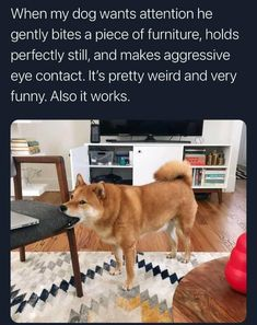 You're almost done with this week, dog lovers, so it's time for your weekly pawerful boost of doggo goodness. #internetmemes #wholesome #dogs #pupper #puppy #dogmemes #funnymemes #cute #Memes #doggo #bark #doggomemes #funny I Smile, Make You Smile, Smile Pics, Dog Memes, Funny Memes, Funny Videos, Jokes, 9gag Funny, Funniest Memes