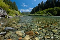 Smith River, the last major free flowing river in California. Trees include the coast redwood, western hemlock, Sitka spruce, grand fir and Douglas fir. Jedediah Smith State Park, California