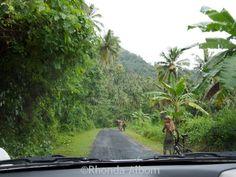 Typical road on the island of Upolu, Samoa
