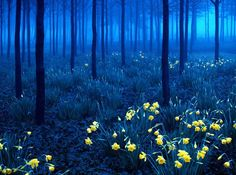 ドイツ/「黒の森」
