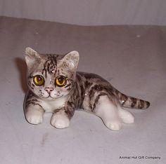 Cute little kitten - Winstanley Cats