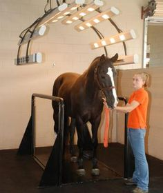 New Equine Vibration Plate Shakes Things Up at The Sanctuary Equine Sports Therapy & Rehabilitation Center | Ride Magazine