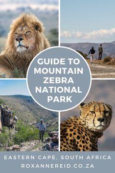 Beginner's guide to the Mountain Zebra National Park - Roxanne Reid Kruger National Park, National Parks, Mountain Zebra, Africa Destinations, Wildlife Safari, Slow Travel, African Safari, Africa Travel, South Africa