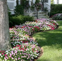 Impatiens, shade, side of house